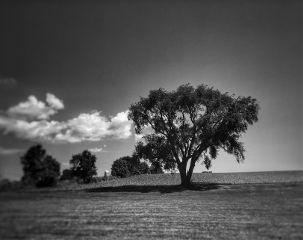 freetoedit remixit natural photography blackandwhite