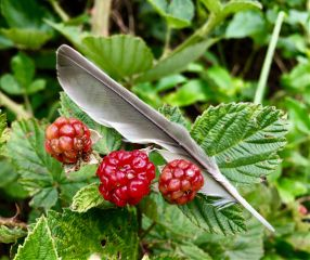 nature naturephotography berries feather