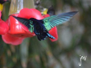 bird nikon travel photography