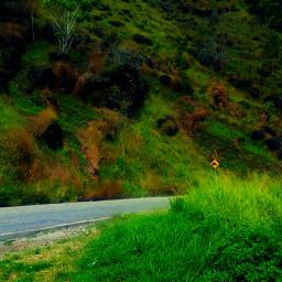 sogeri forests vegetation greenery green freetoedit