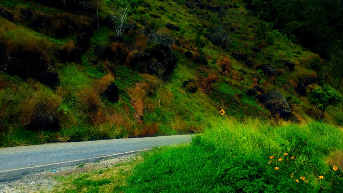 #sogeri #forests #vegetation #greenery #green #filter #funk #nature #bohemian #FreeToEdit #vibrant #art #creative #picture