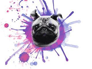 freetoedit dog dogsplash