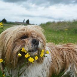 freetoedit dog love tumblr grunge