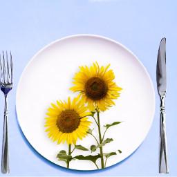 madewithpicsart clonetool colorchange knifeandfork sunflowers ftestickers freetoedit