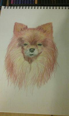 drawing myart coloredpencil mypet doggo