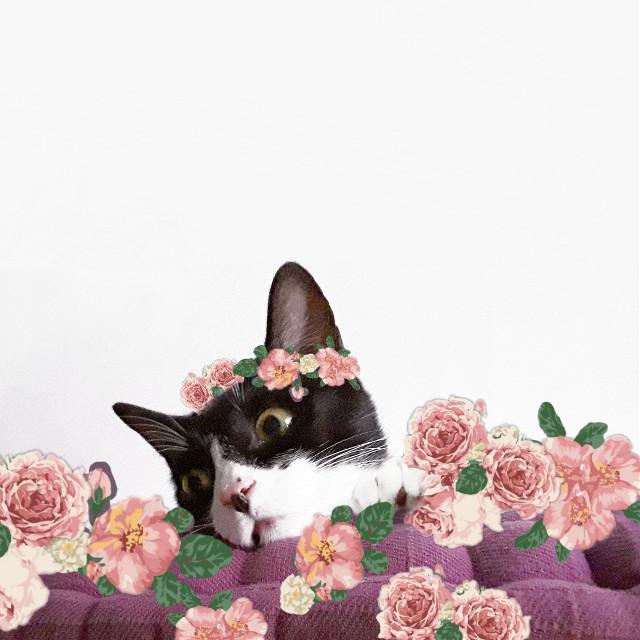 Chica#myedit #creative #artistic #stickers #catsofpicsart #mypet #cute #catsofpicsart