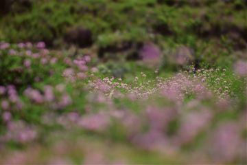 landscape flowers field art perspective
