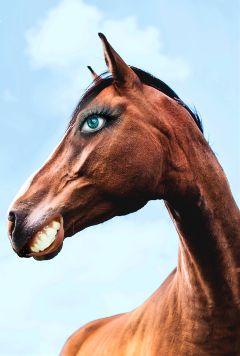 freetoedit remix remixed remixme horse