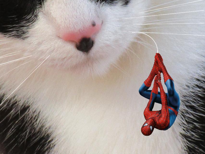 Chica Vs.Spiderman#myedit #creative #artistic #stickers #spidermanstickerremix