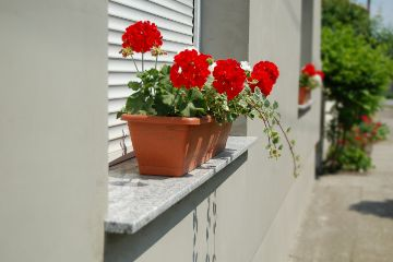 dpcwindowboxes flowers summer window