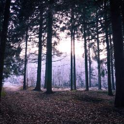 freetoedit becreative dark winter winterwonderland