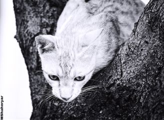 photography pet animal cat blackandwhite
