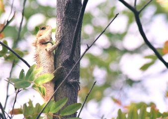 freetoedit nature photography lizard