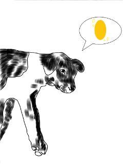my 金币 dog love baby