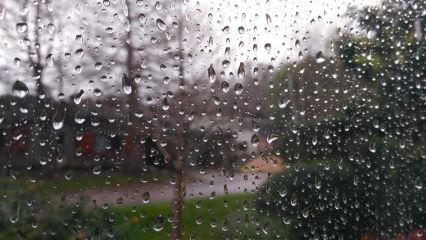 rain drops waterdrops freetoedit