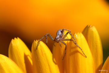 photography myphoto spider macro yellow