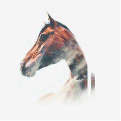 horse freetoedit remix doubleexposure feel