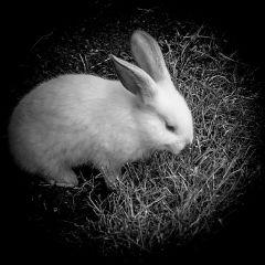 blackandwhite photography black black&white pets