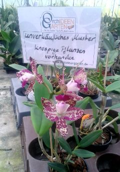 orchids glasshouse store shop niedersachsen