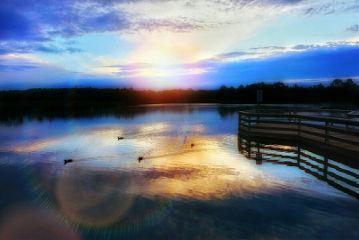 lake lensflare melbourne ducks