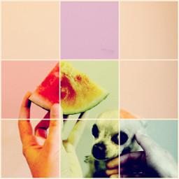 freetoedit remixed chihuahua