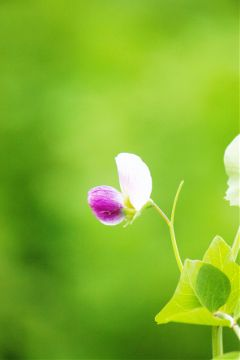 photography outdoors garden plant flower