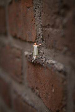 miniature freetoedit