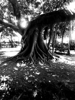 freetoedit tree blackandwhite picsarteffects picsart