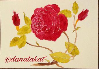 art drawings painting stilllife roses