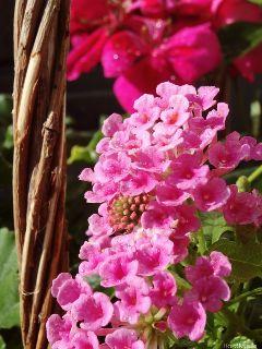 flowers aftertherain almostnofilter alittlebitofseafoam ihavenoideawhattotag