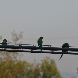 parrots nature myhome relaxing nofilter