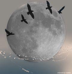 moondaystickerremix myedit editbyme madewithpicsart dewdropsonaweb
