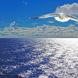 ocean seagull sky reflection backlight
