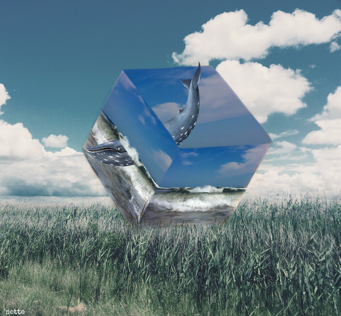 #freetoedit my very first #3dcube hope you like it! #grassyfield  #ocean #thesea #whalesticker #myoriginalmyedit