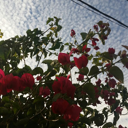 flowers_lovers blue_sky clouds freetoedit