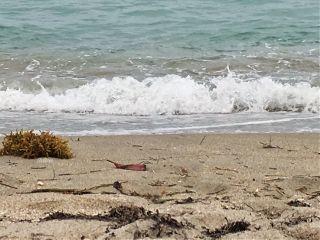 beach ocean wave photography sandybeach