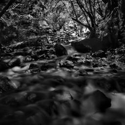 blackandwhite river nature stone water