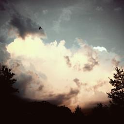 nature clouds bird sunset colorful