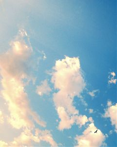 freetoedit sky clouds seagull blue
