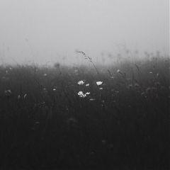blackandwhite monochrome flowers nature