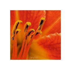 orange garden flower closeup petals