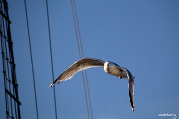 seagull bluesky summer photography myphoto