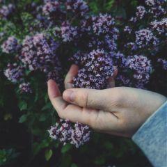 freetoedit plant nature silence beauty