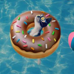 freetoedit kitten water doughnut ball