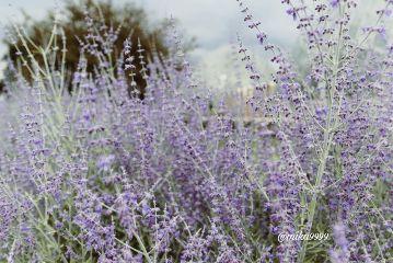 freetoedit photography noedit myclick flower
