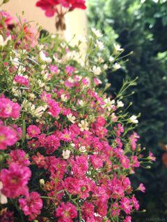flower dodgereffect blooming pink nature