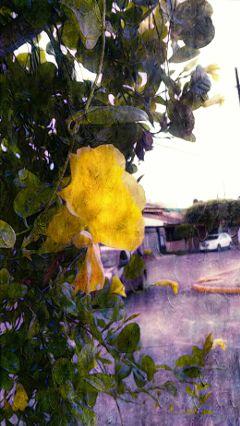 flower love nature.fe.de nature