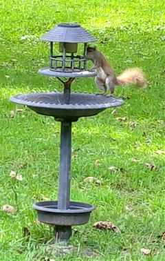 photography pets squirrel