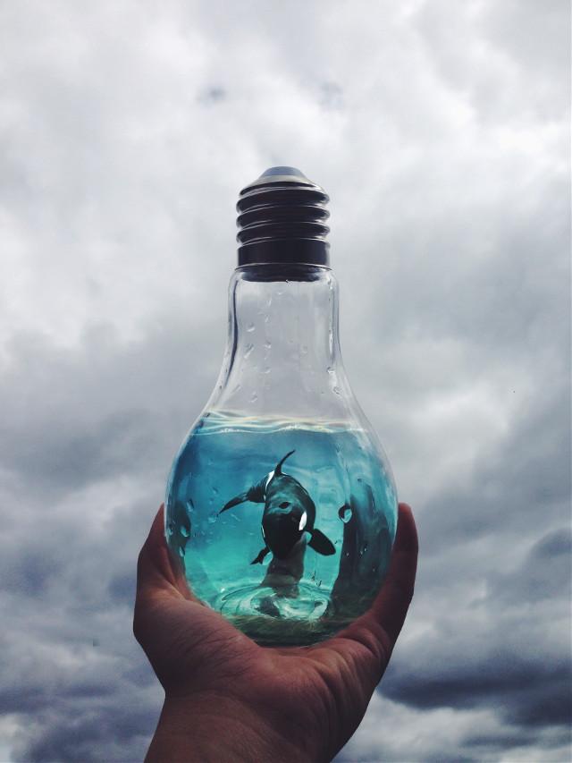 Instagram: gaby_villacres • • • #freetoedit #art #interesting #freetoeditremix #newphoto #sea #picsart #picsarteffects #picoftheday #vsco #water #orca #picsartlife #picsartist #floodlight #sky #artwork #artistic #newphoto #clouds @pa @freetoedit