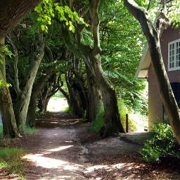 amerongen woods treemagic mysterious abandonedhouse